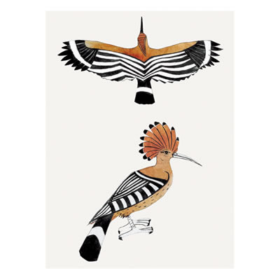 Bea Forshall - Two Hoopoes