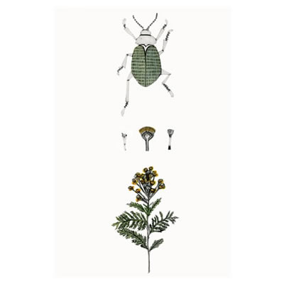 Bea Forshall - Tansy Plant with Tansy Beetle