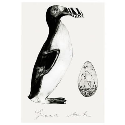 Bea Forshall - Great Auk