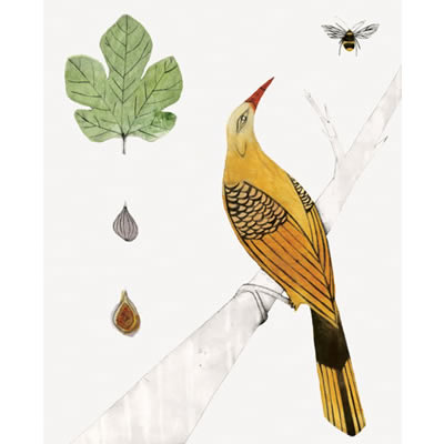 Bea Forshall - Golden Oriole