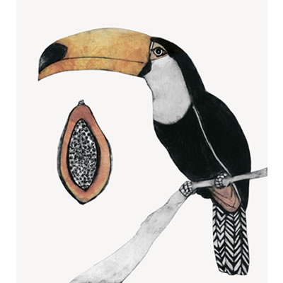 Bea Forshall - Toucan