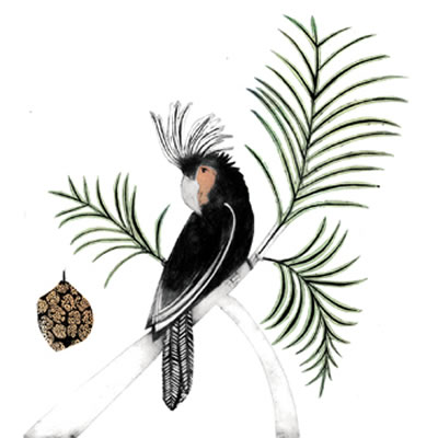 Bea Forshall - Palm Cockatoo