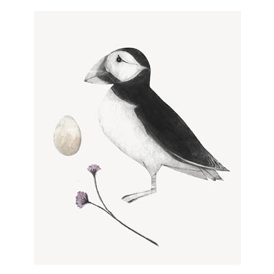 Bea Forshall - Puffin and Sea Thrift