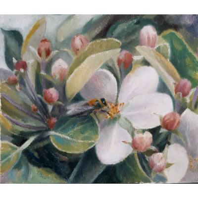 Honey bee on apple blossom by Kate Lynch