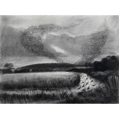 Starling Roost (willow charcoal drawing)