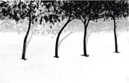 From 'Trees in Snow' series Photograph: Abbas Kiarostami