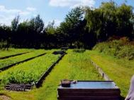 Raised beds at the Oakcroft Organic Garden. Photograph: Lorna Howarth