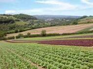 A diverse range of lettuce farmed organically at Riverford. Photograph: Riverford Organics