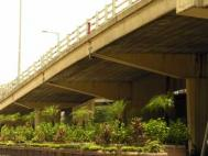 Imaginative use of urban green space, under a flyover Photograph: Zoe Yau/iStock