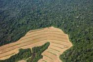 Deforestation of the Amazon showing areas cleared for soybean plantations Photograph: Sue Cunningham