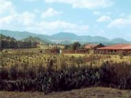 Traditionally biodiverse farmstead containing food and medicinal crops Photograph: Sandra Hill