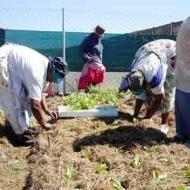 Food processing workshop in Khayelitsha