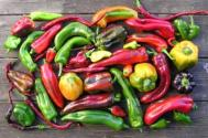 Organically grown chillies and peppers Photograph: David Baker
