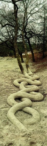 Two Trunks by Andy Goldsworthy, from Time: Andy Goldsworthy published by Thames and Hudson, UK, ISBN 9780500510261