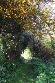 Up the garden path. Photograph: Brigitte Norland