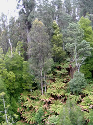 Tasmania rainforest, courtesy http://www.sxc.hu/profile/saine