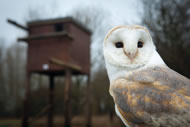 Photograph: Barn Owl Centre in Gloucester, courtesy The Co-operative