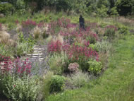 Fig 2. Expansive meadow-like planting by Jane Hurst