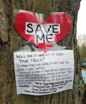 Photo courtesy of Sheffield Tree Action Group (STAG)