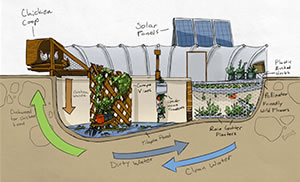 The cycle of a Garden Pool. Illustration © gardenpool.org