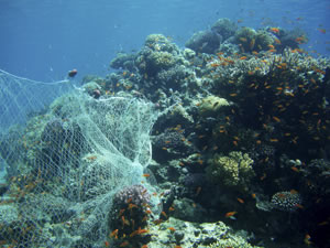 Ghost gear caught on coral reef. Image via Wikimedia Commons