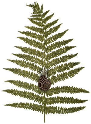 Fern with a snail by Marta Bartniak @florally.art