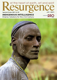 issue cover 250