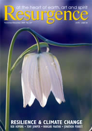 issue cover 257