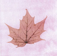 Maple Leaf Greeting Cards (pack of 6)